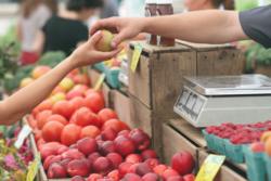 Farmers Market Apple to Hand
