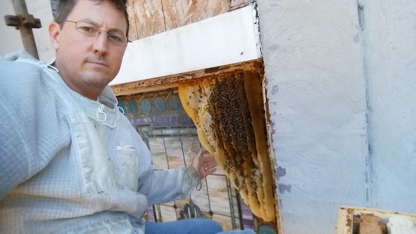 Maryland Beekeepers Ended 2016 with Another Year of Heavy Losses