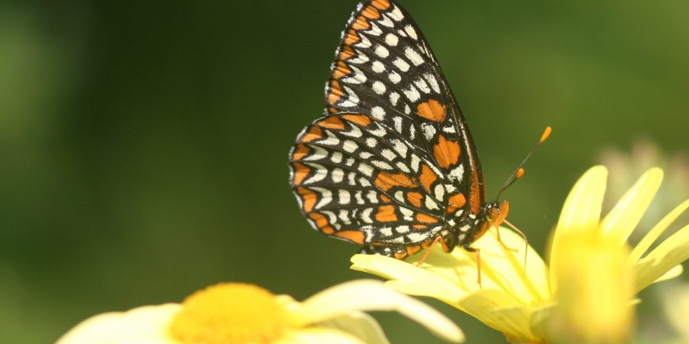 April Showers Bring May Flowers (for Pollinators)