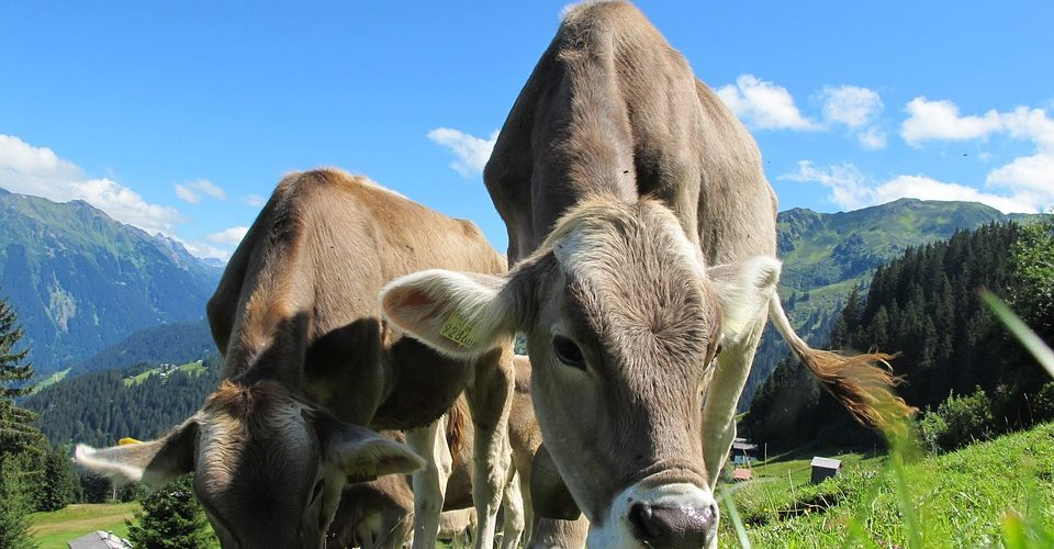 How Does Your 'Organic' Milk Stack Up?