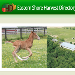 Eastern Shore Harvest Directory Features Fair Farms Partners