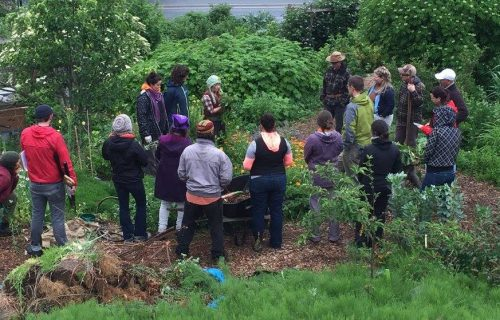 Food Forests: The Perfect Match for Reluctant Gardeners