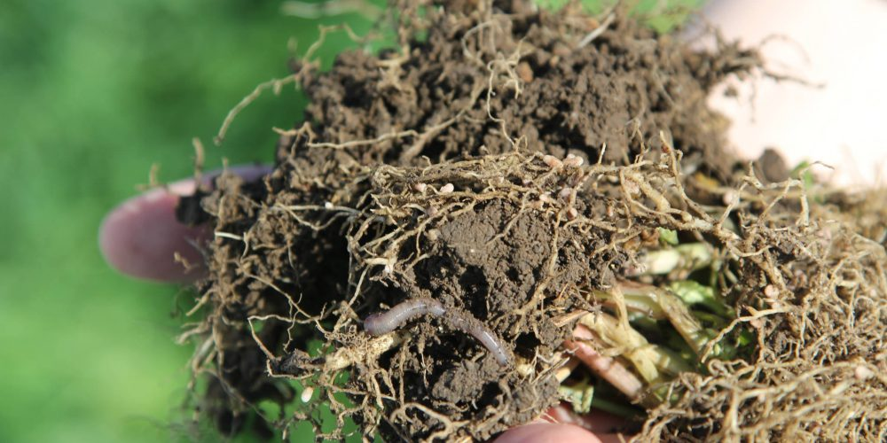 Healthy Soils: A Climate Change Solution