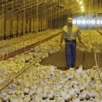 Farmers Lose Out to Corporate Interests in USDA Decision