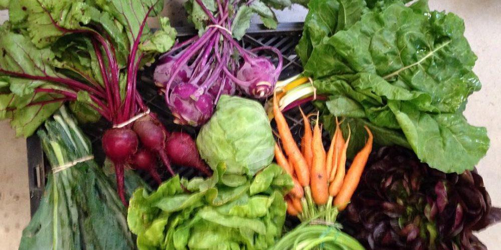 7 Tips to Choose and Get the Most out of a CSA
