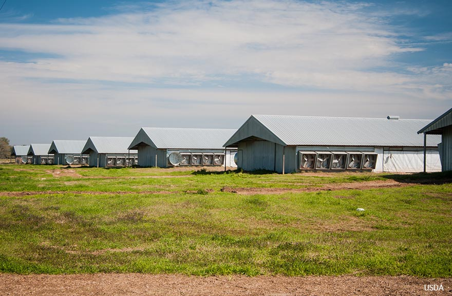 Industrial Poultry Houses - USDA Photo