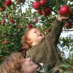Organic and Pesticide-Free Pick-Your-Own Farms in Maryland