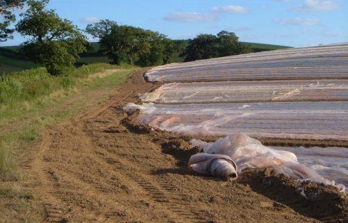 More Farmers Moving Away from Plasticulture