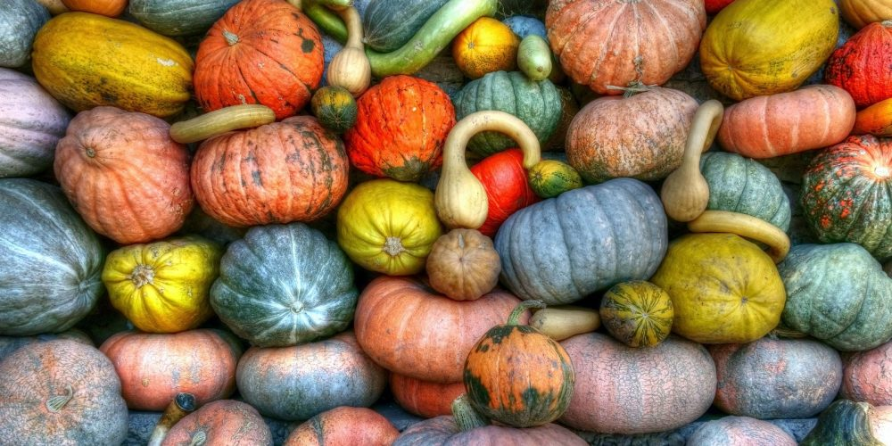 Quiz: What Type of Winter Squash are You?