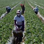 How to Support the Farmworkers at the Center of our Food System