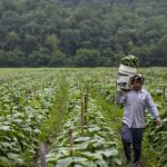 Farmworkers' Fight for a Livable Wage