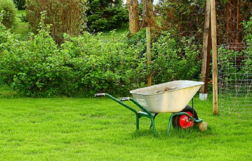 Your Lawn: How Green is that Grass?