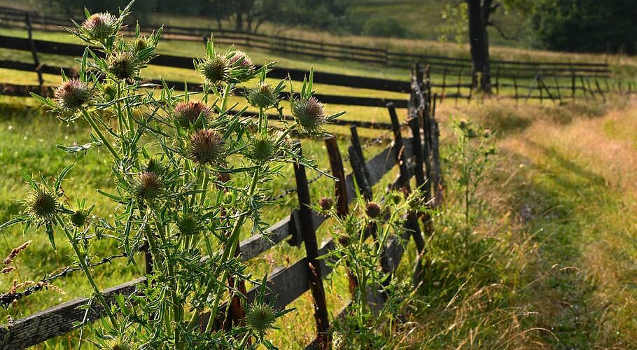 A Look at Tenant Farming in Maryland