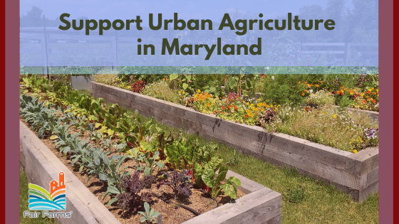 Take Action: Support Urban Agriculture in Maryland