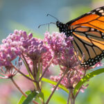 Take the Clear Choices Clean Water Pollinator Pledge to Celebrate Pollinator Month!